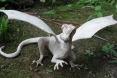 bog-dragon-1