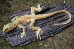 log-lizard