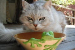 poppy-and-frog-bowl